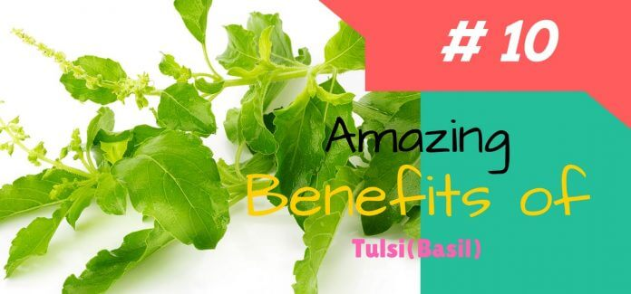 10 AMAZING BENEFITS OF TULSI (BASIL)