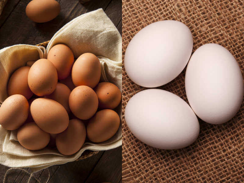 Brown Eggs Vs White Eggs – Which Is Healthier?
