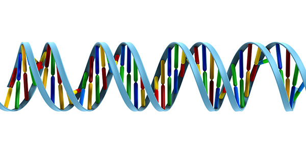Is There a Genetic Component to Hearing Loss?