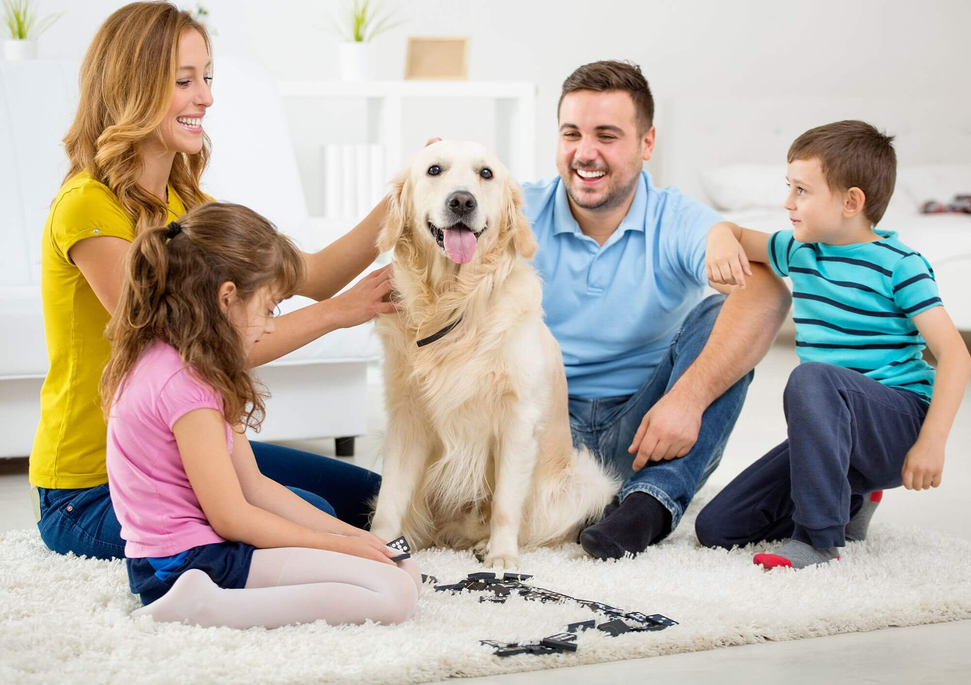 How to prepare for the arrival of the dog at home